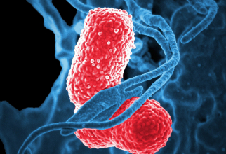 Bacterii intestinale