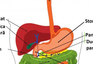 Colangita biliară primitivă este o boală autoimună