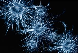 Creierul este în permanență cercetat de oamenii de știință