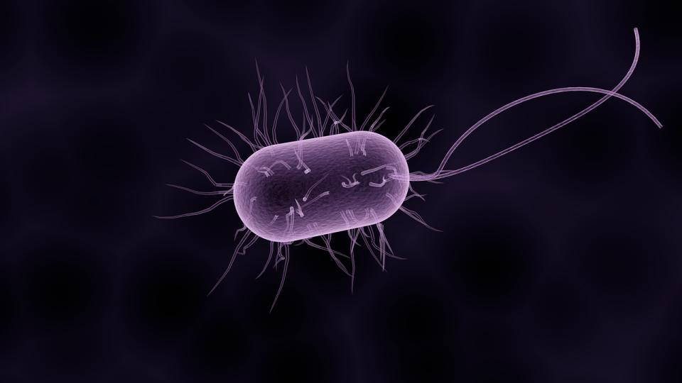 """Sistemul imunitar """"taie"""" oxigeul bacteriilor pentru a le ține sub control"""