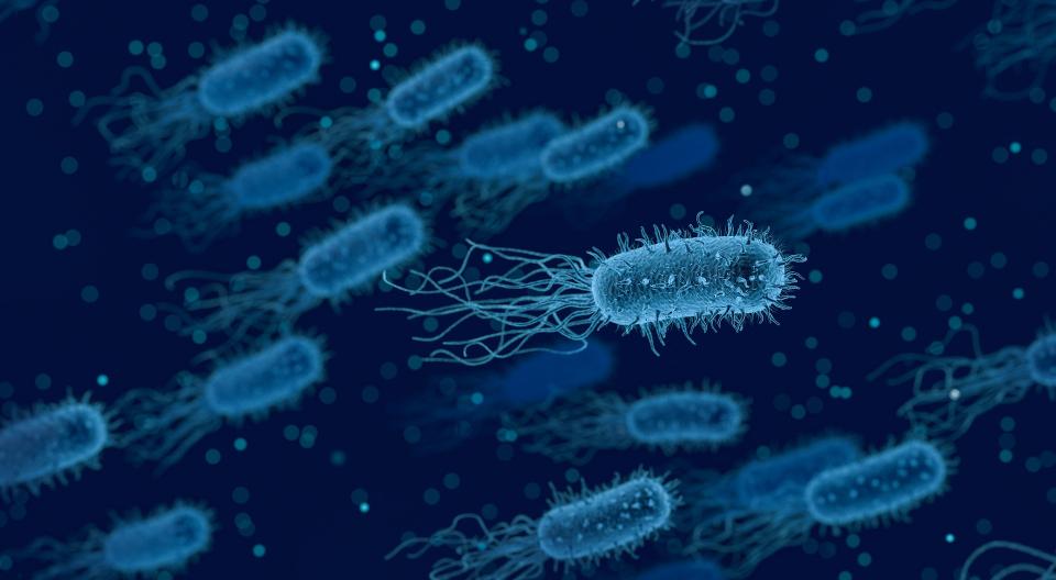 Helicobacter pylori se ascunde în peretele stomacului, pe care îl străpunge