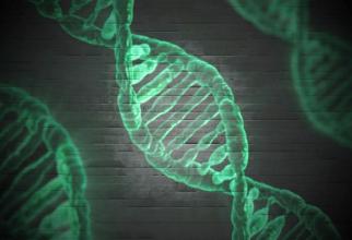 Mutație genetică