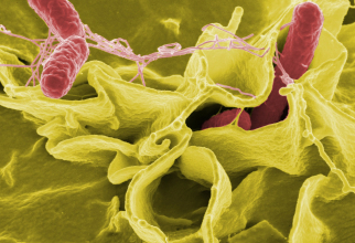 Microbiomul intestinal