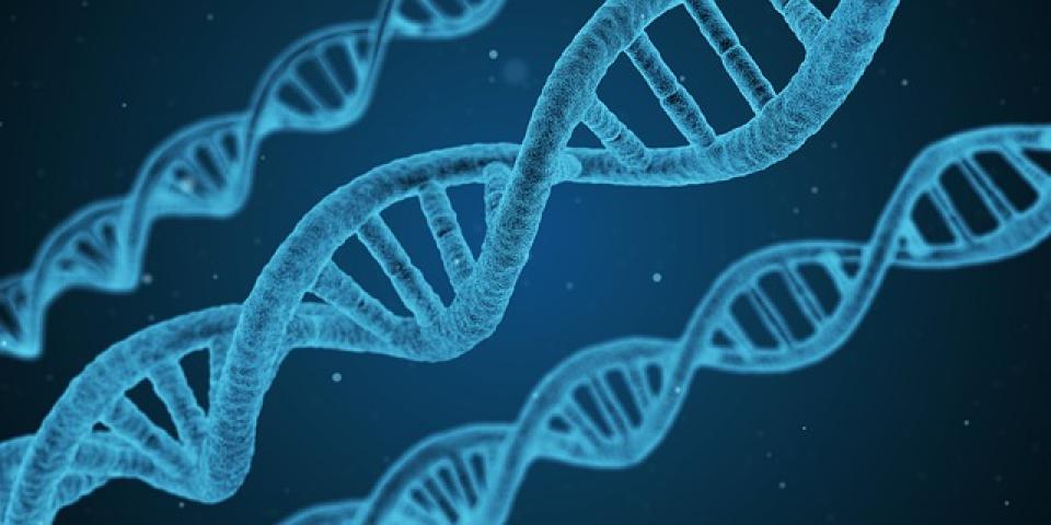 Patru gene cu variații rare care afectează riscul diabetului de tip 2 au fost descoperite