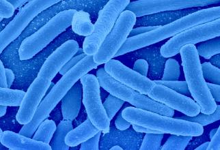 Bacteriile care provoacă tuberculoza sunt extrem de adaptabile.