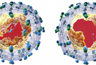 tulpini de virus care provoacă hepatita C. Foto:  Wellcome Trust Sanger Institute