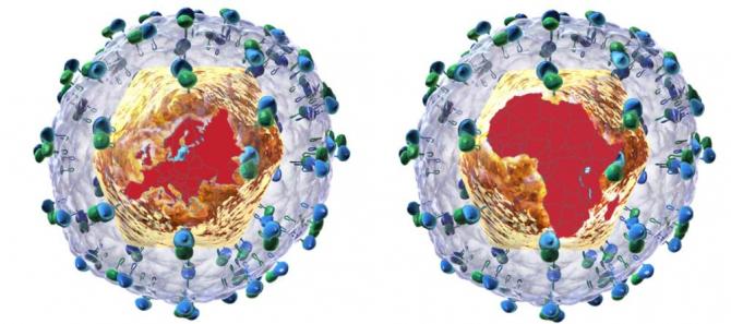 tulpini de virus care provoacă hepatita C. Foto:  Wellcome Trust Sanger Institute