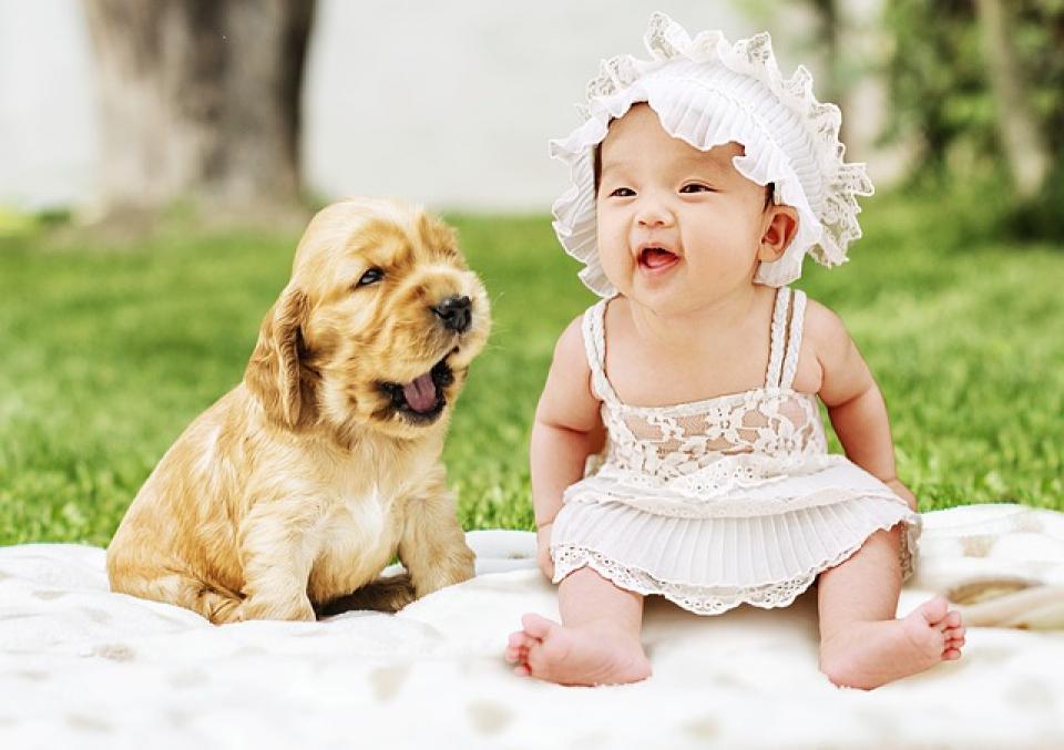 Bebelusii care traiesc langa un animal de companie, mai putin predispusi la alergii