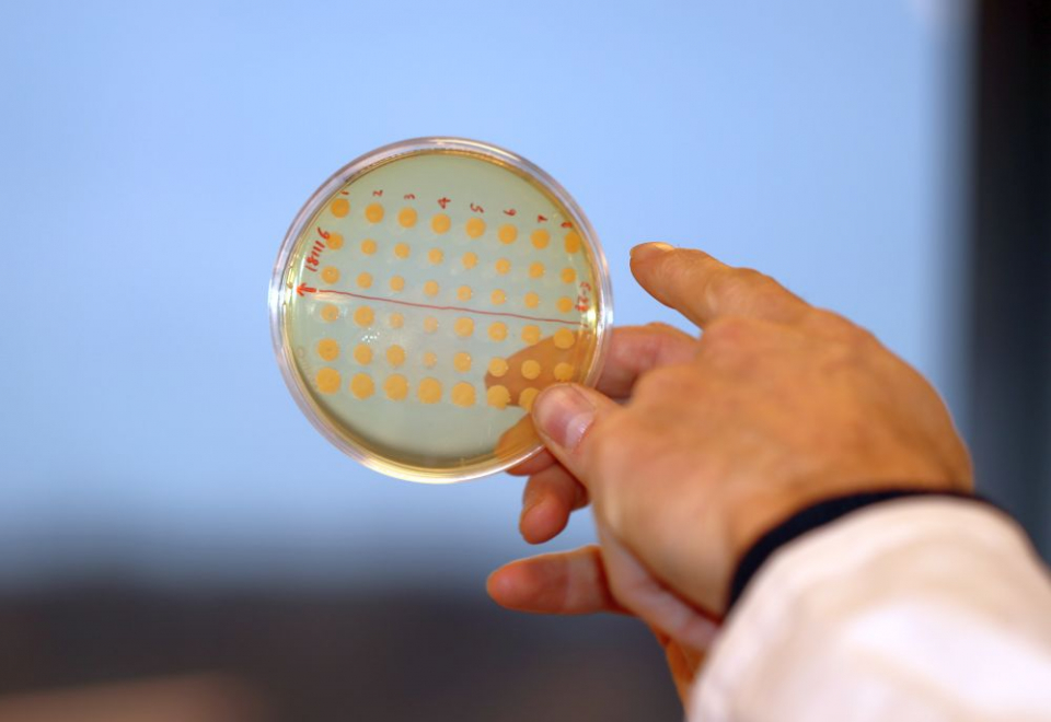 Infecțiile severe ar putea fi date de capacitatea baceriilor de a manipula sistemul imunitar  Credit: The Novo Nordisk Foundation Center for Biosustainability (DTU Biosustain)