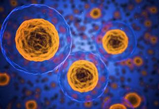 Celulele umane. FOTO: pexels.com