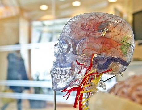 O proteină din vasele de sânge protejează creierul ca un scut