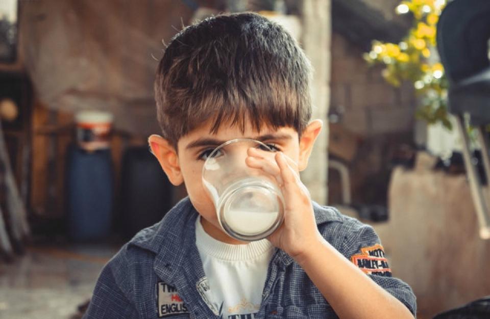 Alergie alimentara, bacteriile din intestin ii protejeaza pe copiii cu alergie la laptele de vaca
