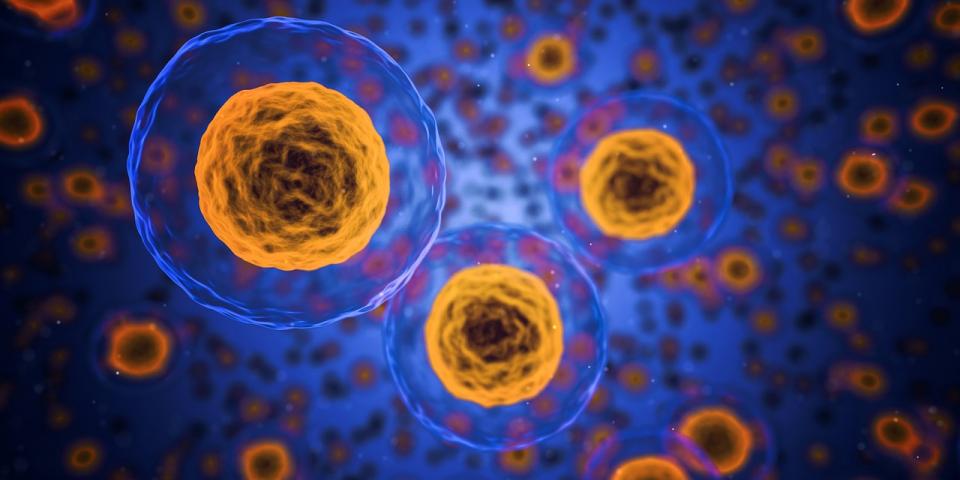 Celulele tumorale   FOTO: pexels.com