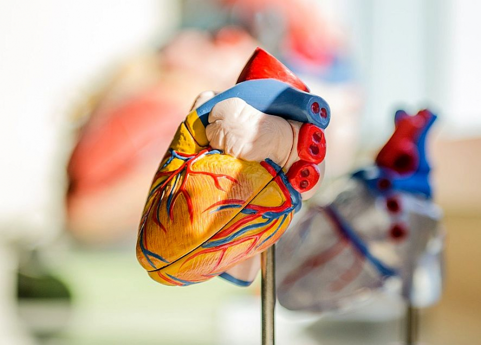 Afecțiuni cardiace