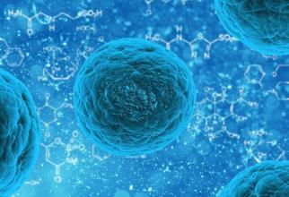 Celule canceroase care se transformă