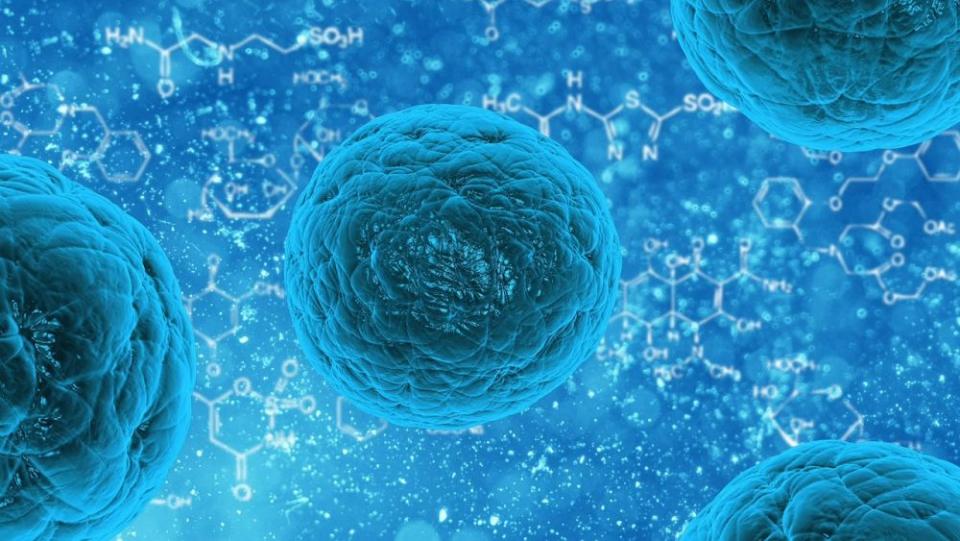 Celulele T care au un anume defect nu recunosc și nu distrug celulele cancerigene