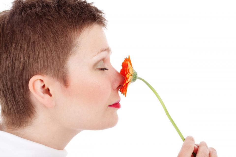 Nasul nu e singurul organ de simț al mirosului