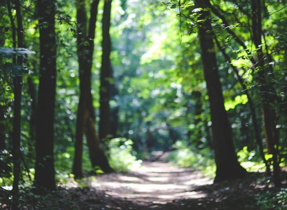 Plimbările prin zone verzi vă ajută să vă fiți mai calmi  FOTO: pexels.com