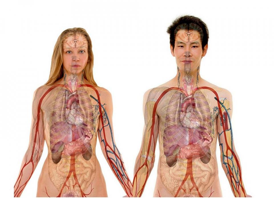Bolile autoimune afectează mai mult femeile decât bărbații