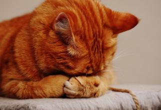 Pisicile înțeleg când sunt strigate pe numele lor  FOTO: pexels.com