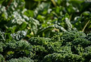 Un compus al brocoli este activ împotriva tumorilor     FOTO: pexels.com