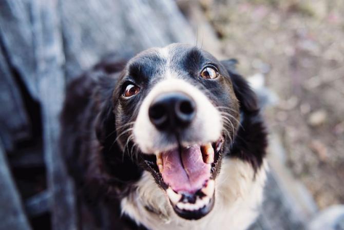 Câine vesel   FOTO: pexels.com