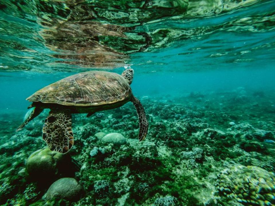 Mecanismul prin care țestoasele hibernează îi poate ajuta pe oameni după infarct, susțin cercetătorii  FOTO: pexels.com