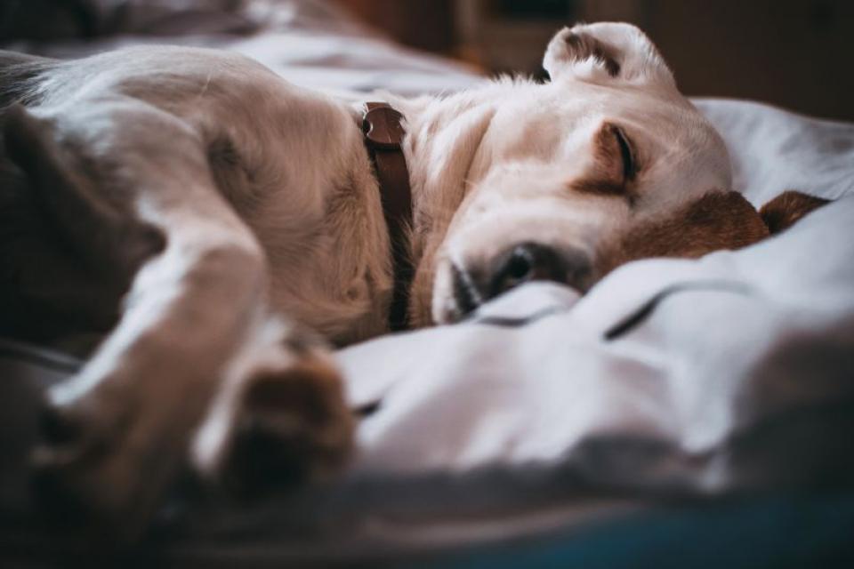 Somnul cu un câine ar fi mai odihnitor decât cu un bărbat, susține un studiu  FOTO: pexels.com
