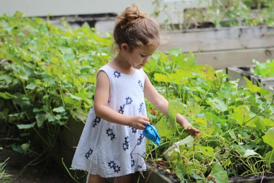Grădinăritul îi ajută și pe copii să facă față stresului   FOTO: pexels.com
