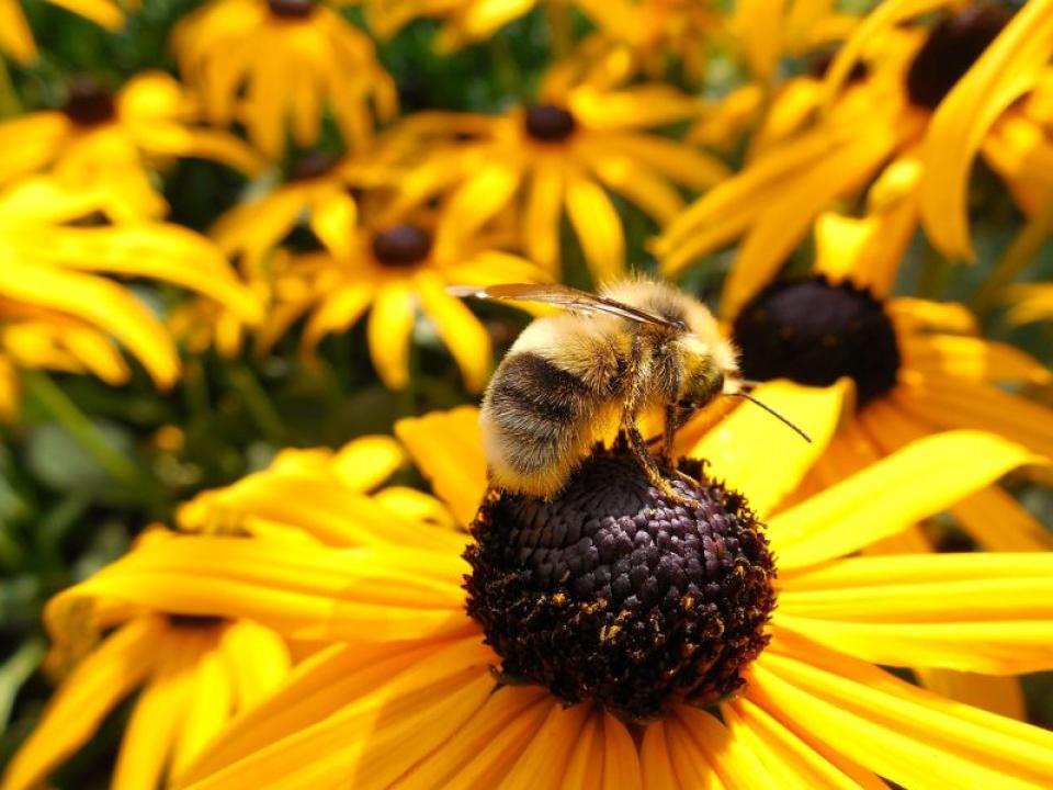Vitamina E, din ce alimente o luați   FOTO: pexels.com