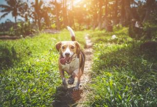 Gene, câini. Unii oameni au o înclinație genetică să aibă câini pe lângă casă, susține un studiu.  FOTO: pexels.com