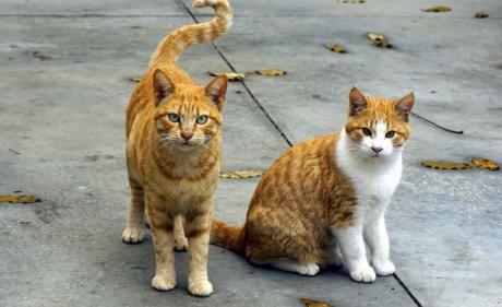 Alergii, factori declanșatori. Pisicile pot provoca alergii   FOTO: pexels.com