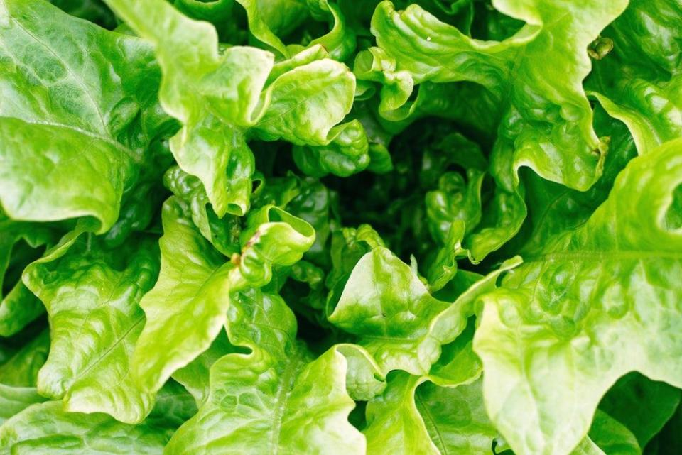 Plante precum salata pot transmite bacterii rezistente la antibiotice extrem de periculoase
