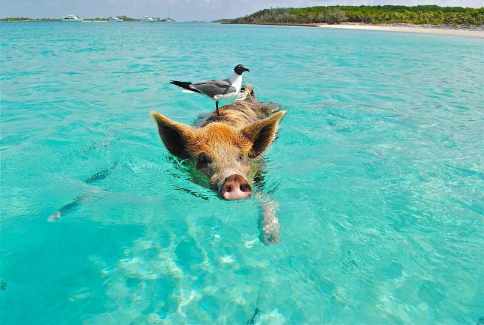 Scăldatul în ocean schimbă microbiomul pielii omului  FOTO: pexels.com