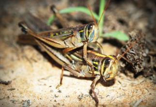 Insectele și arahnidele conțin antioxidanți, susțin cercetătorii  FOTO: pexels.com