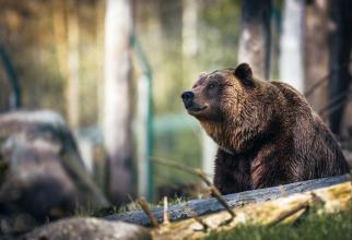 După ce i-a atacat pe copii, ursul a dispărut în pădure
