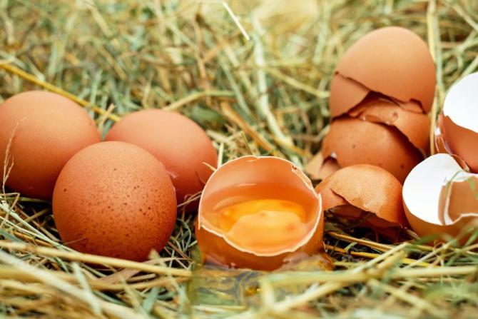 Coji de ouă  FOTO: pixabay