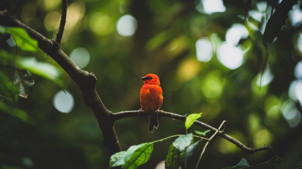 Păsările sălbatice și stresul, subiect de studiu  FOTO: pexels.com