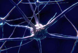 neuronii implicati in starea de veghe sunt distrusi de proteinele tau, iar pacientul atipeste mai des