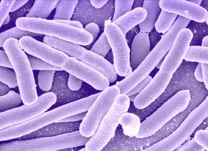 """C. difficile a evoluat în două specii diferite, una dintre ele fiind foarte adaptată la """"viața de spital"""" și rezistentă la dezinfectanți"""