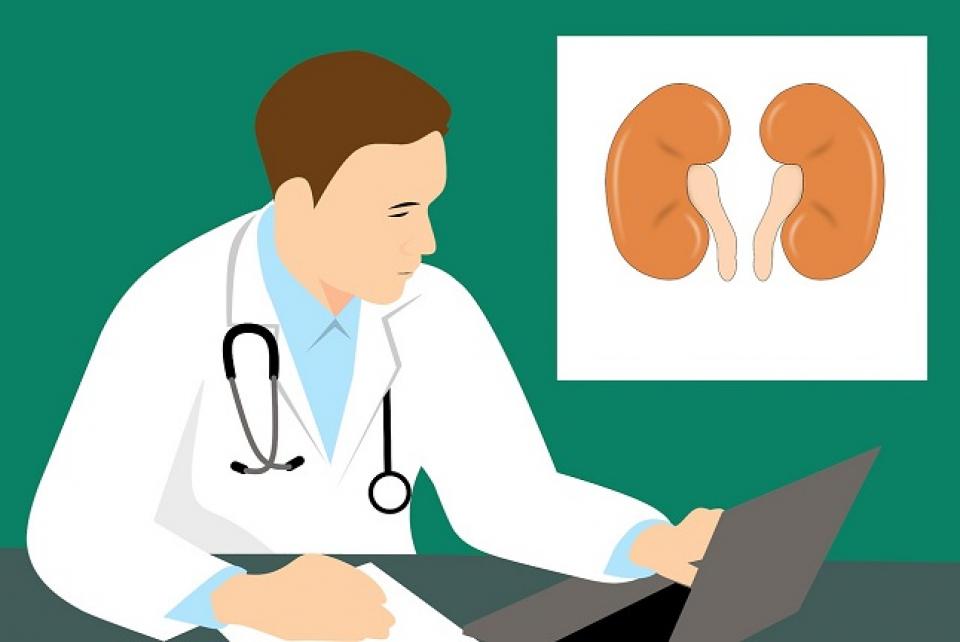 Leziunile renale acute     Foto: pixabay.com