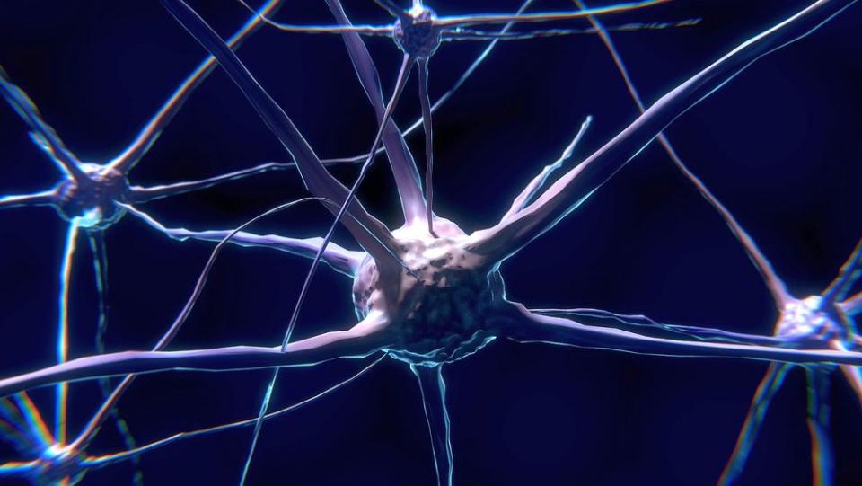 Neuroni  creier
