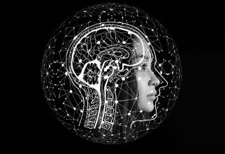 Celule diferite unice în creierul masculin și feminin