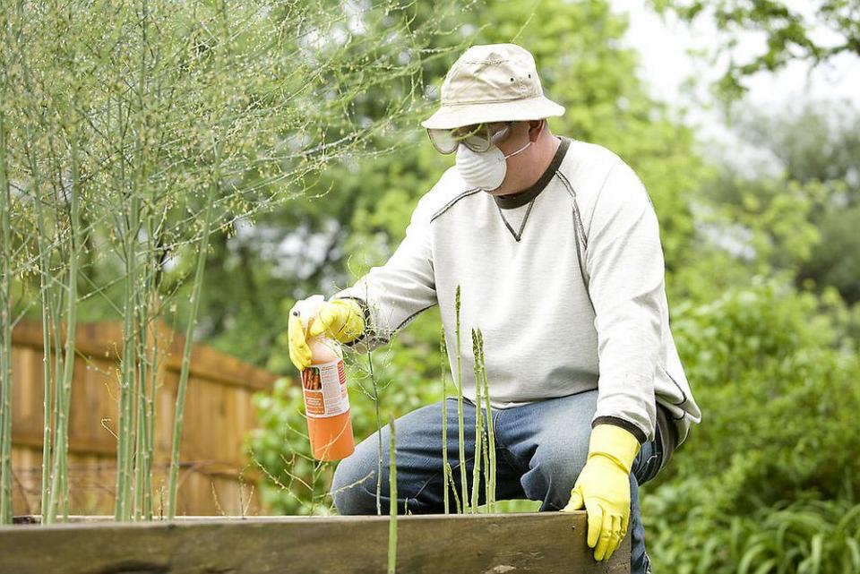 Pesticidele sunt mai nocive pentru inima bărbaților. Foto: CDC/ Dawn Arlotta