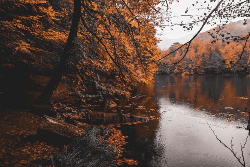 Râu  FOTO: pexels.com