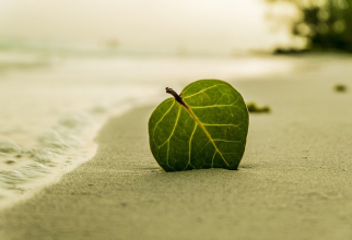 Plajă  FOTO: Pixabay