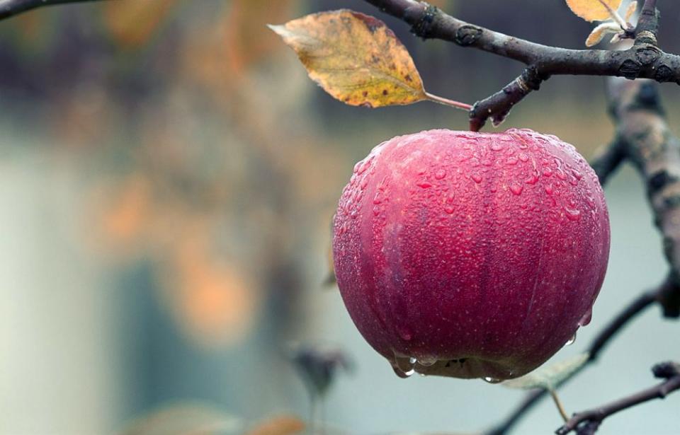 Gheorghe Mencinicopschi spune că mărul trebuie consumat în starea sa naturală, nu în fresh