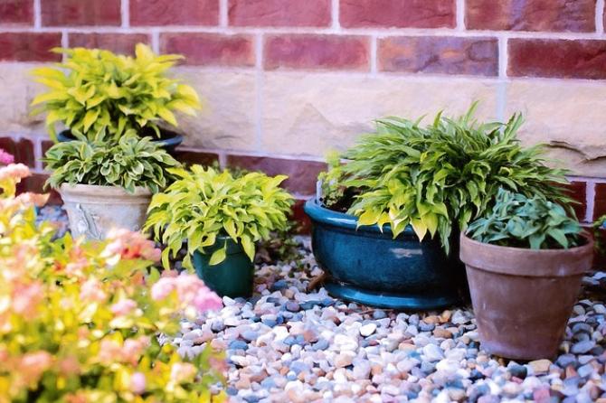 Plante  FOTO: Pixabay