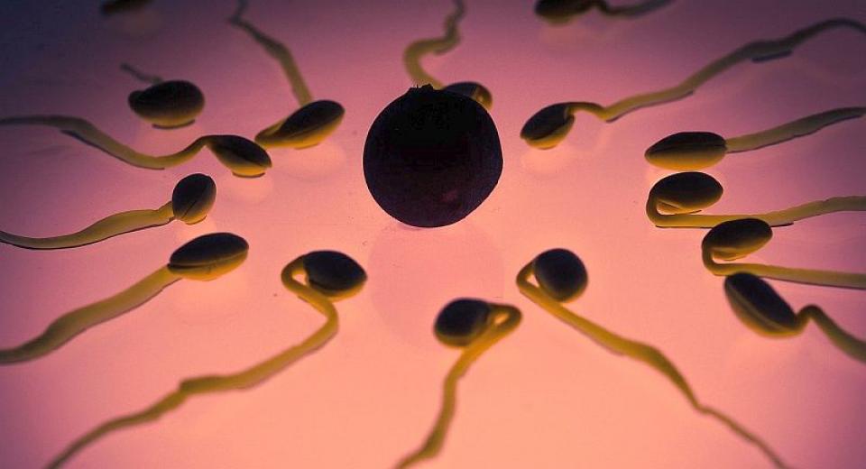 Fertilitate masculina