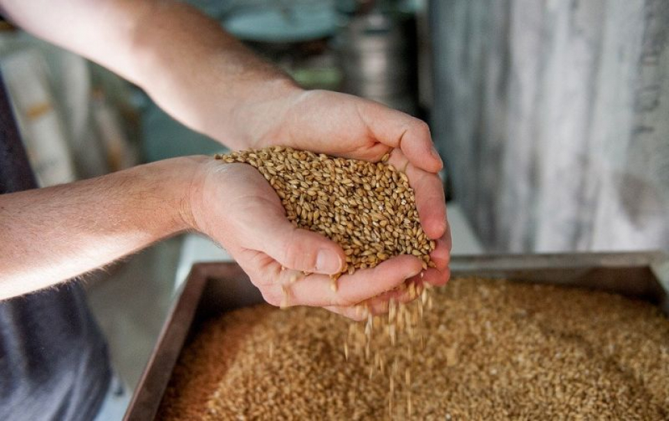 Orzul este unul dintre cele mai nutritive cereale integrale